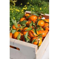 Tangerine - 15kg